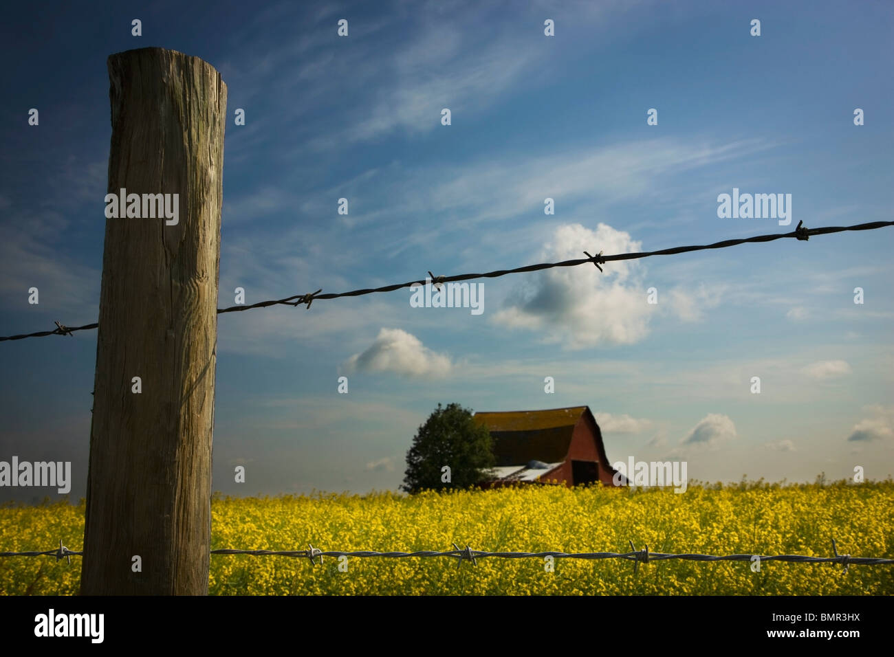 Alberta, Canada; View Of An Old Barn Through A Barbed Wire Fence - Stock Image