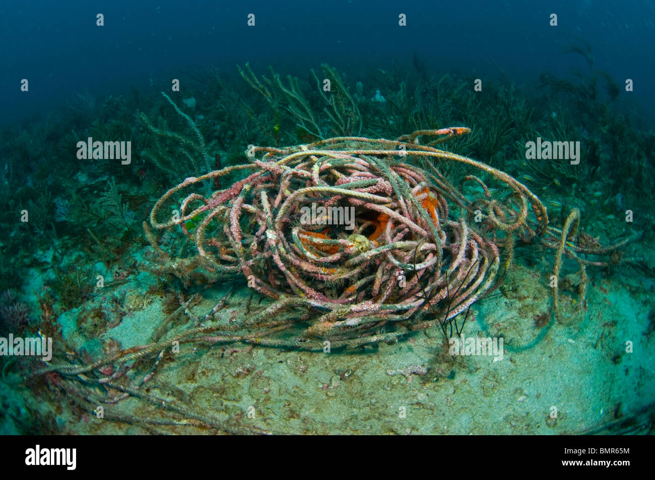 Discarded rope littering the coral reef in Palm Beach, FL. Rope and fishing line trap, maim and kill thousands of - Stock Image