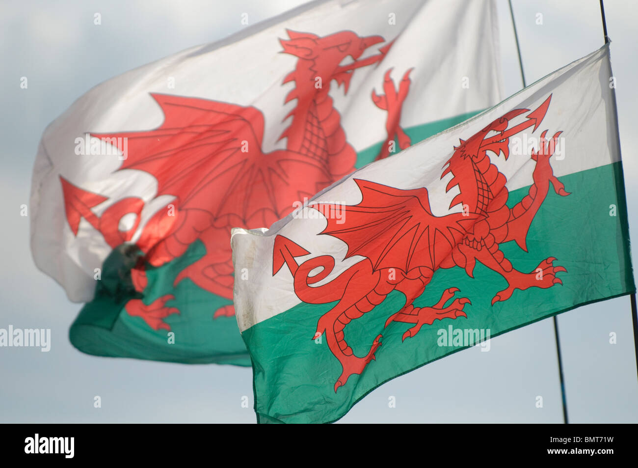 welsh red dragon banners flags, wales - Stock Image