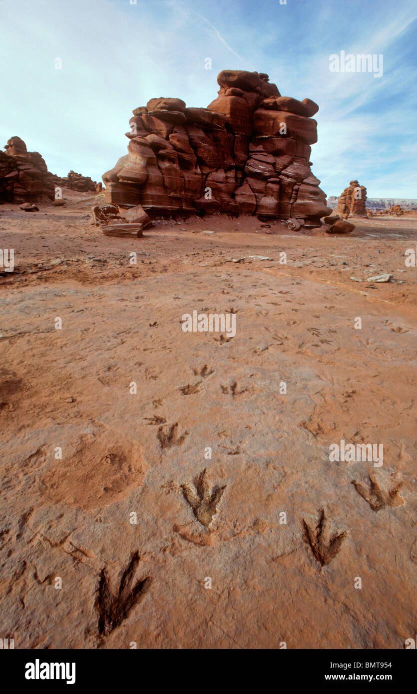 Fossil Dinosaur Tracks in the Painted Desert, Ward Terrace, Navajo Reservation, Cameron, Arizona, USA - Stock Image