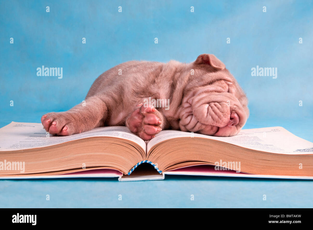 Little Cutie Fell Asleep While Reading a Book - Stock Image