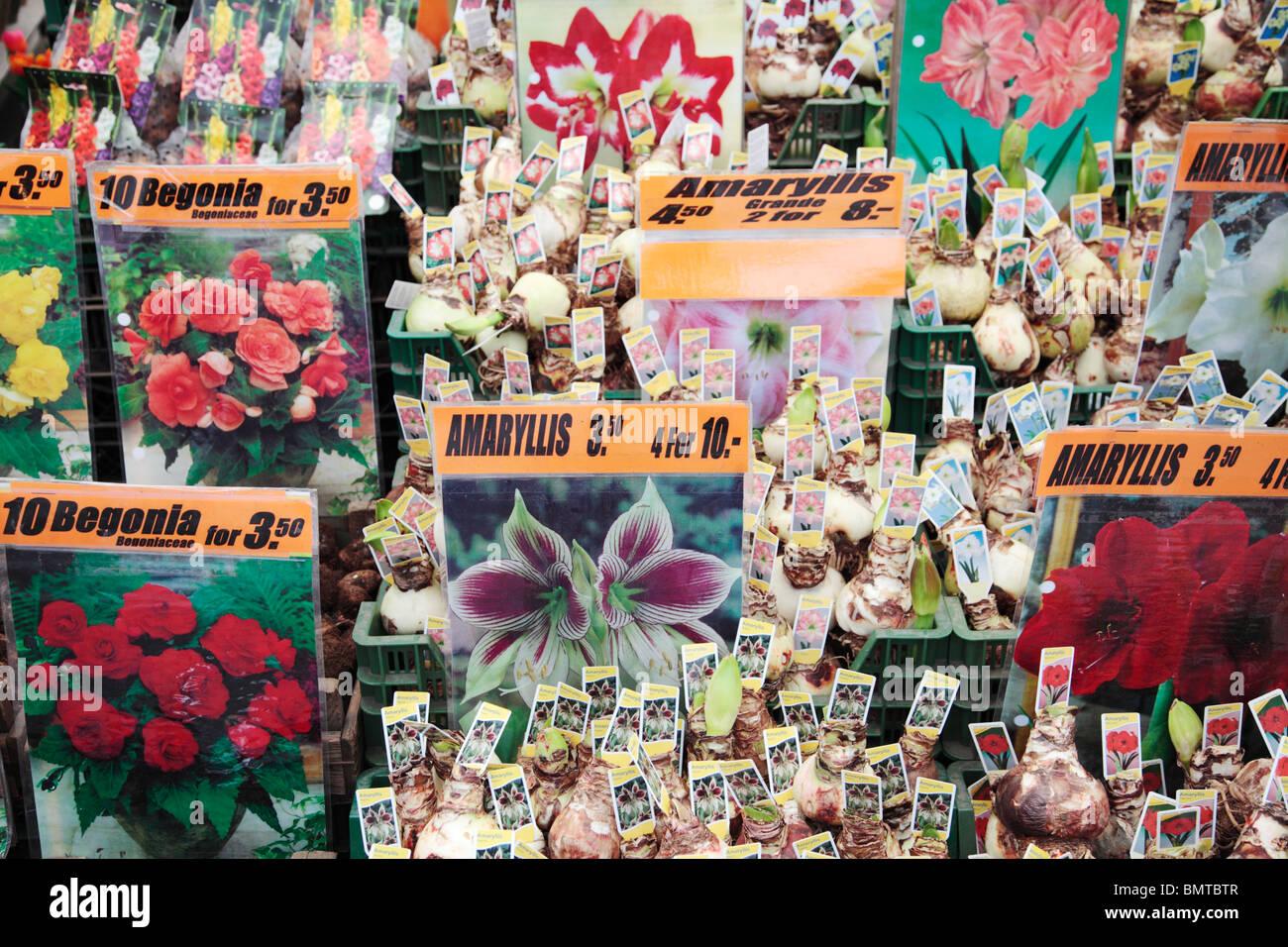 Flower Shop Amsterdam Stock Photo