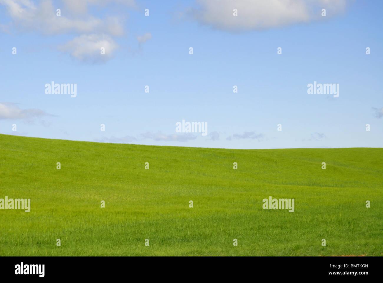 view over wheat fields to horizon, near Huete, Cuenca Province, Castile-La Mancha, Spain - Stock Image