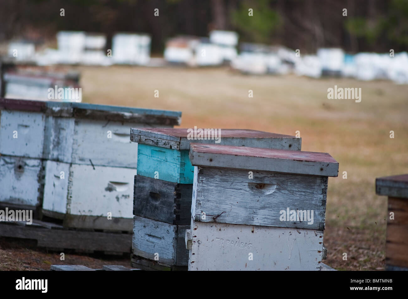 Bee keeper's hives, Manistee county, Michigan - Stock Image