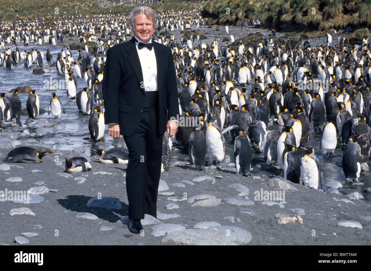 A visitor to Antarctica dresses appropriately in a tuxedo to visit the King Penguins at Gold Harbor on South Georgia - Stock Image