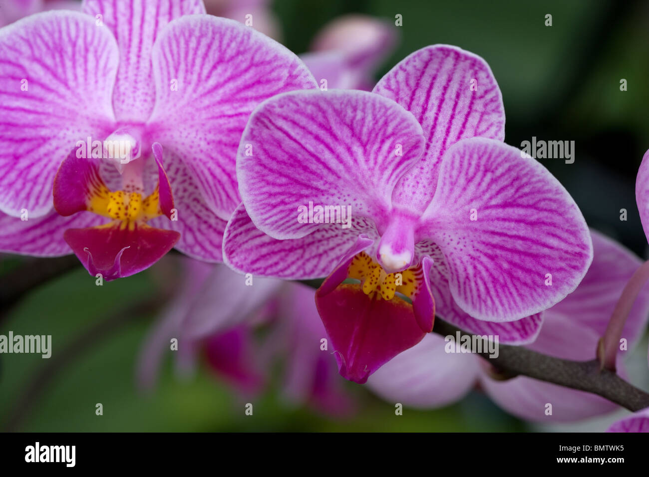 orchid, flowers, hobbies, gardening, green, nature, - Stock Image