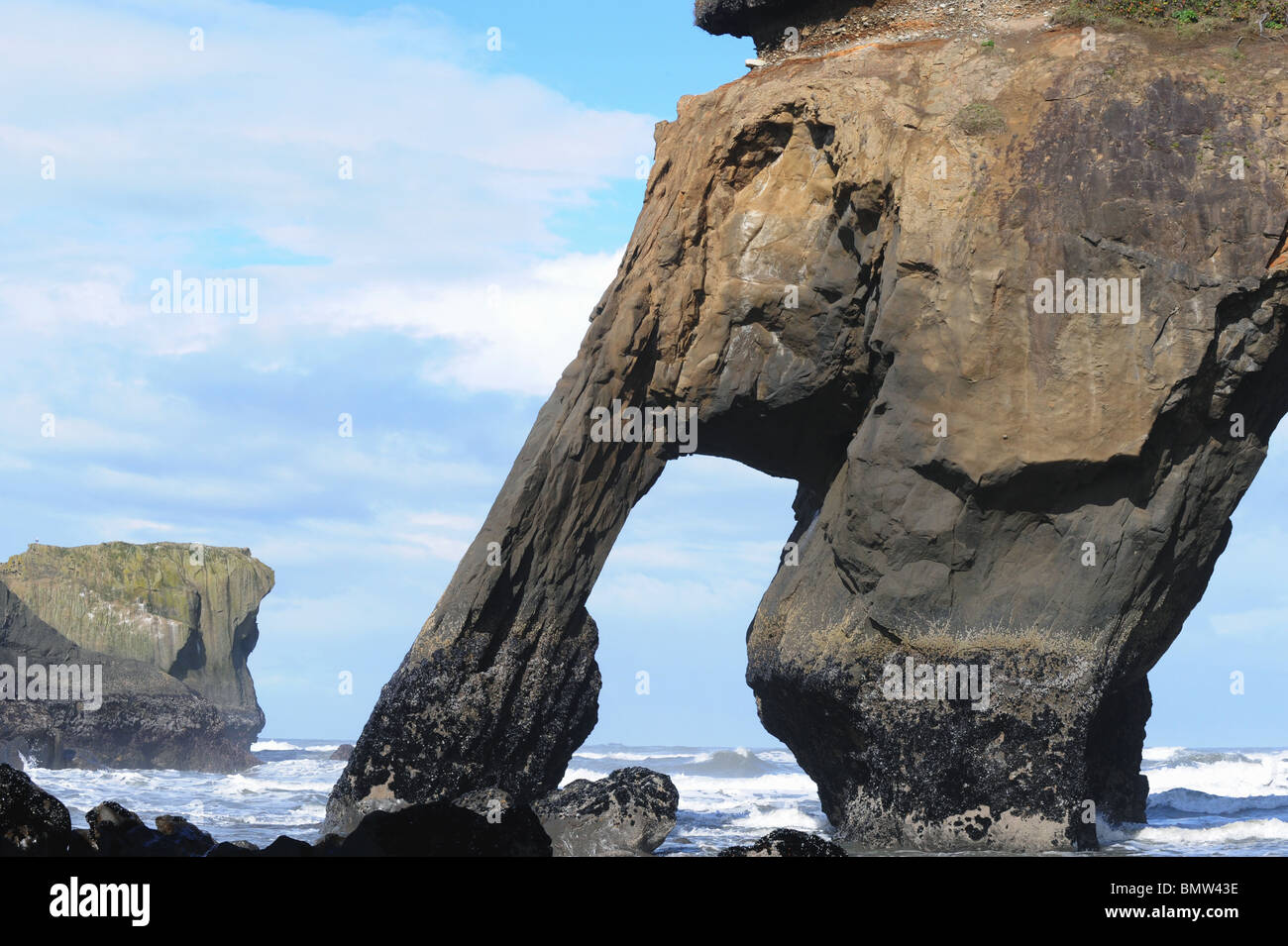 Elephant Rock And Seastacks Quinault Indian Reservation