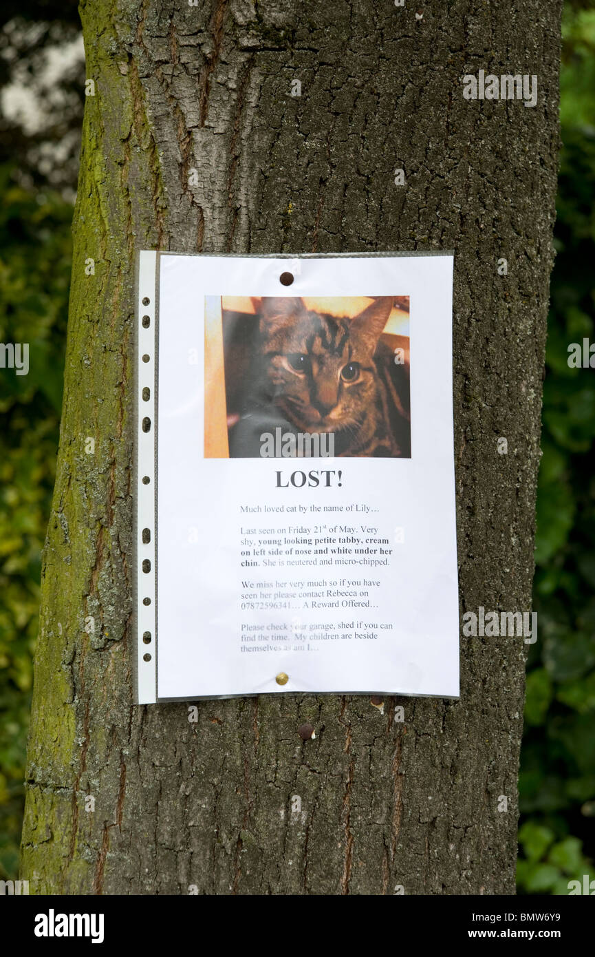 Missing sign attached to tree for lost cat, London, England, UK - Stock Image