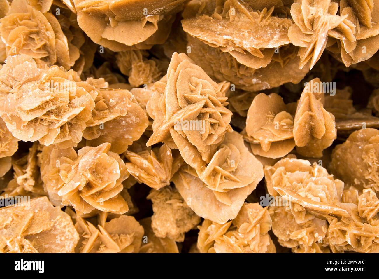 Desert Roses are offered for sale in Tunisia. - Stock Image