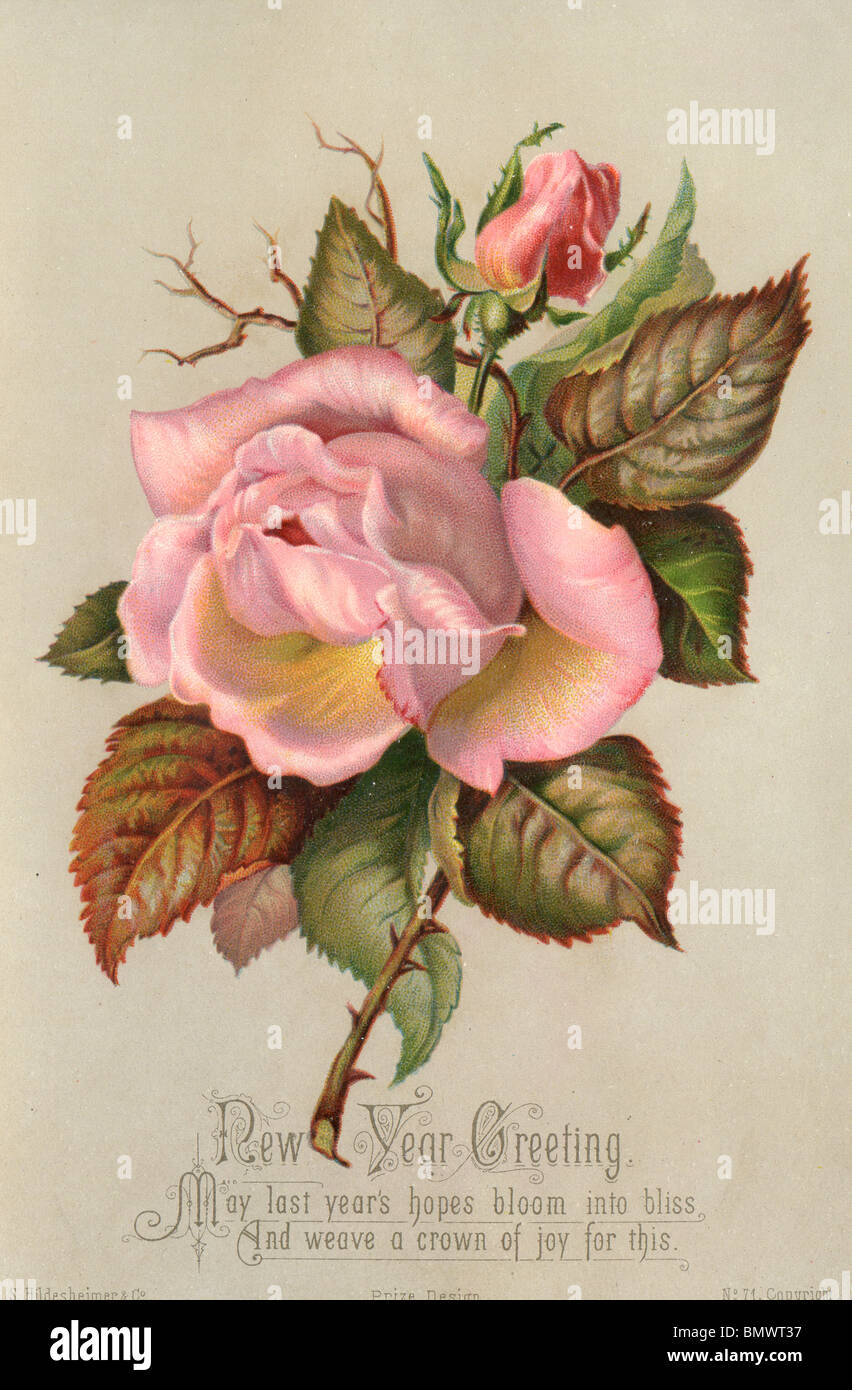 new year card pink roses stock image