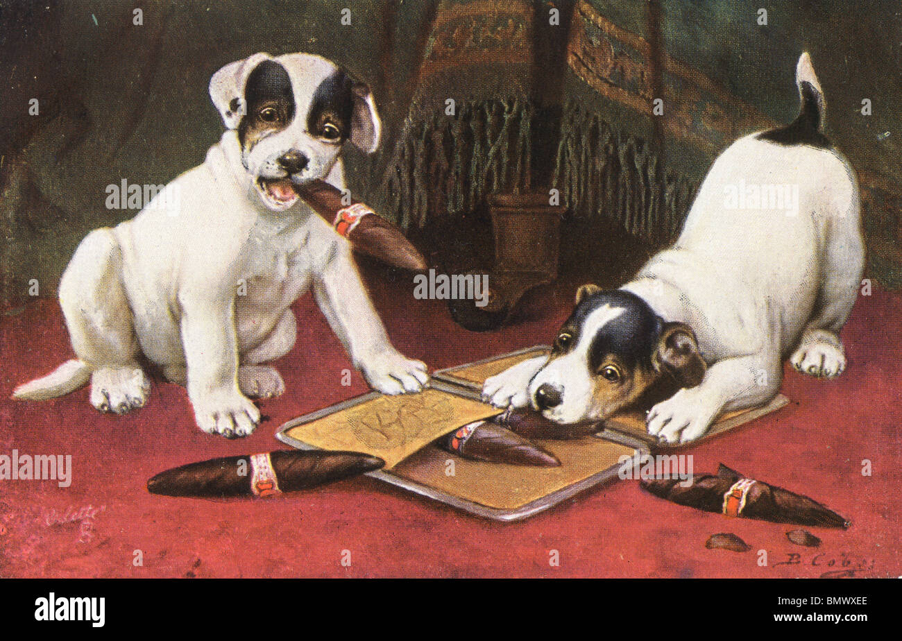 Dogs enjoying a Cigar! Stock Photo