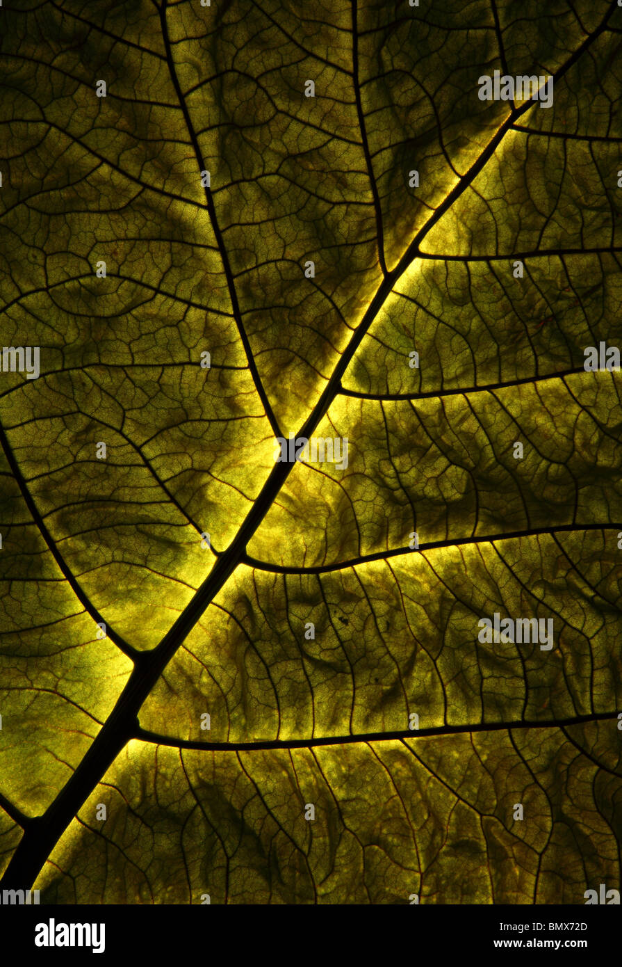 Close-up of a green plant leaf - Stock Image