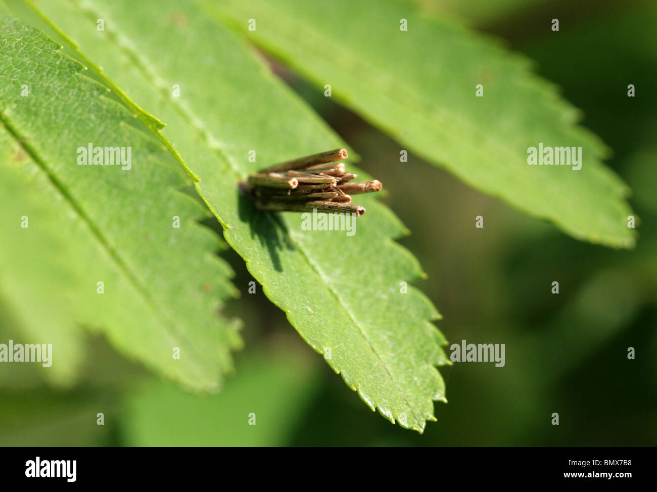 Psyche Stock Photos & Psyche Stock Images - Alamy