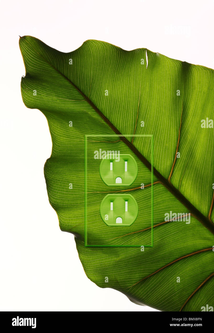 A green plant leaf with an electrical power outlet - Stock Image