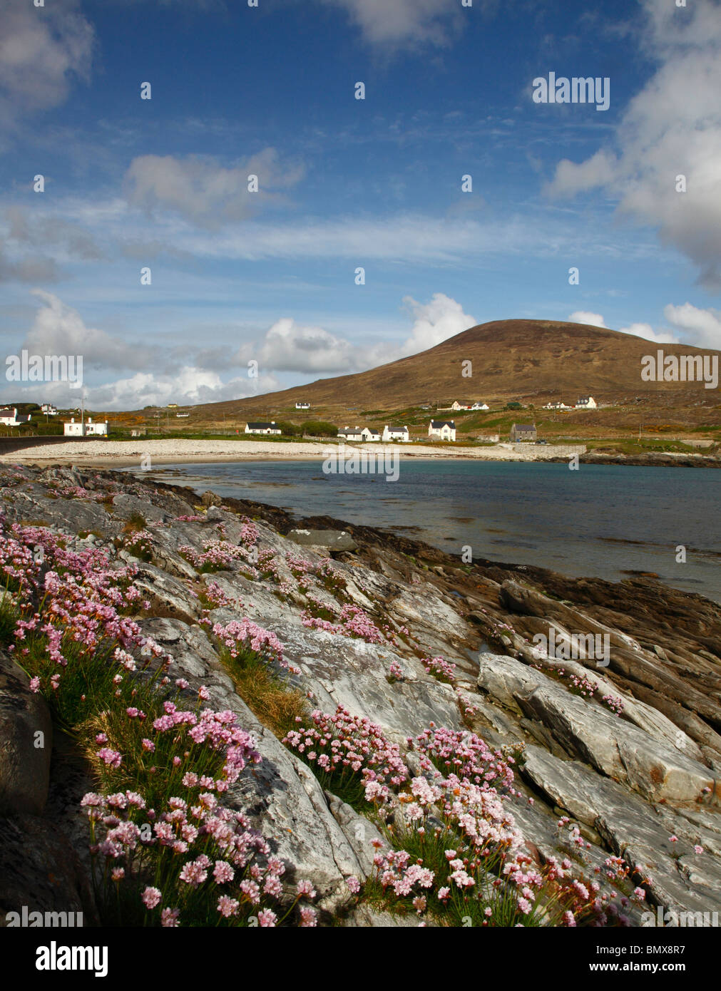 Dooega bay and beach with Knockmore mountain and foreground thrift flowers,Achill island,western Ireland,Eire. - Stock Image