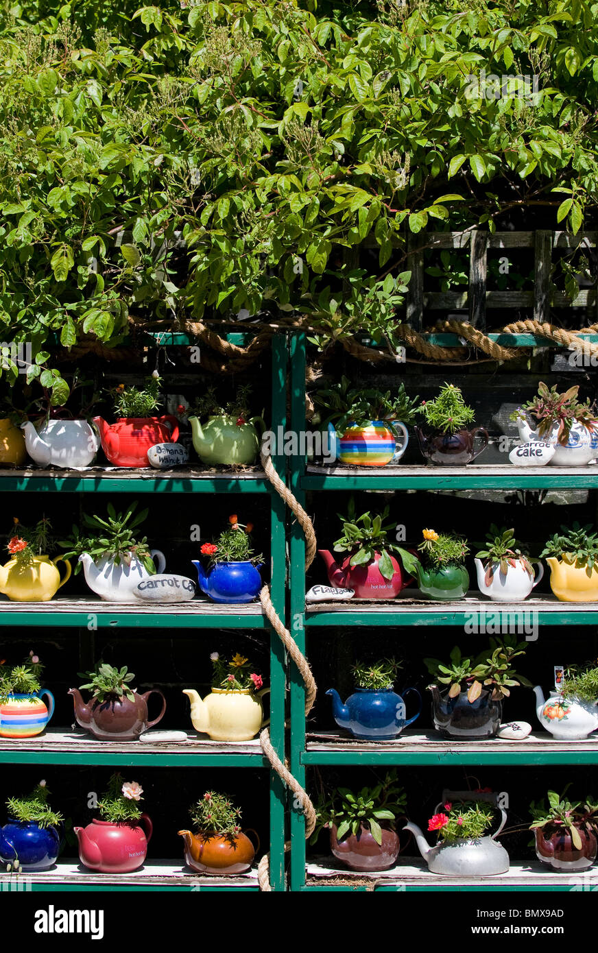 Shelves containing colourful teapots with plants in Thorpeness in Suffolk.  Photo by Gordon Scammell - Stock Image