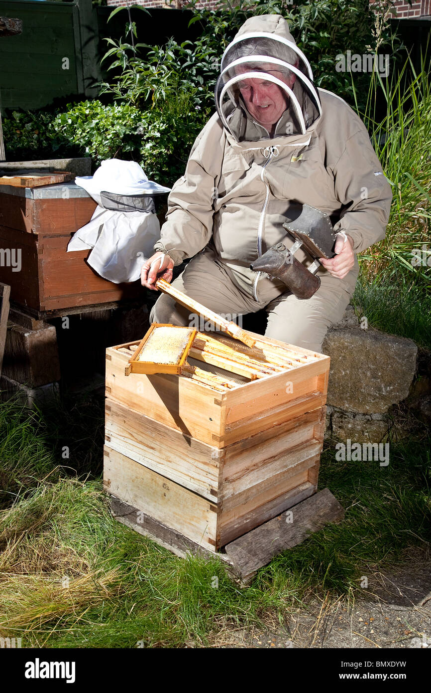Bee keeper working on a beehive in suburban garden in UK - Stock Image