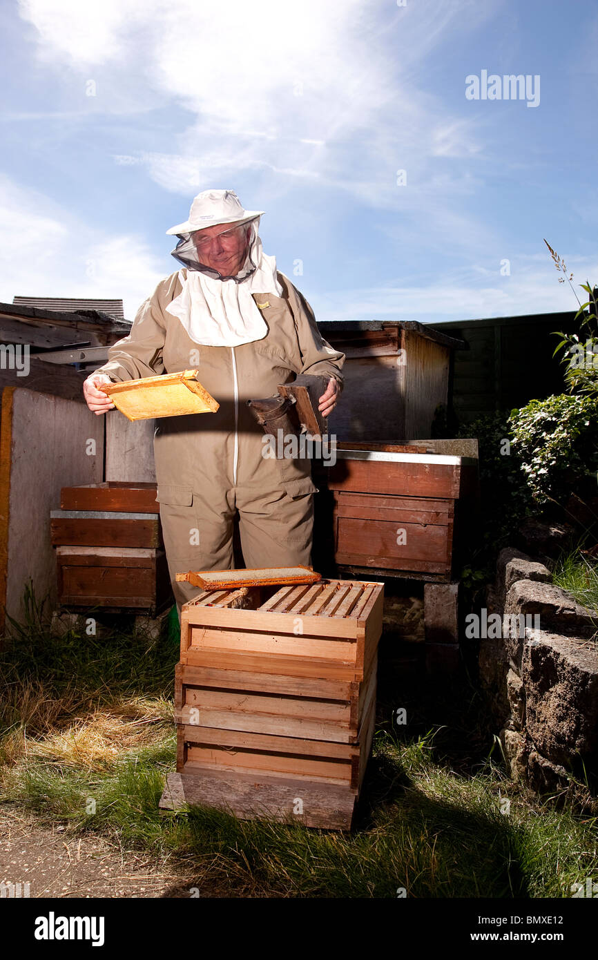 Bee keeper working on a beehive in suburban garden in UK Stock Photo