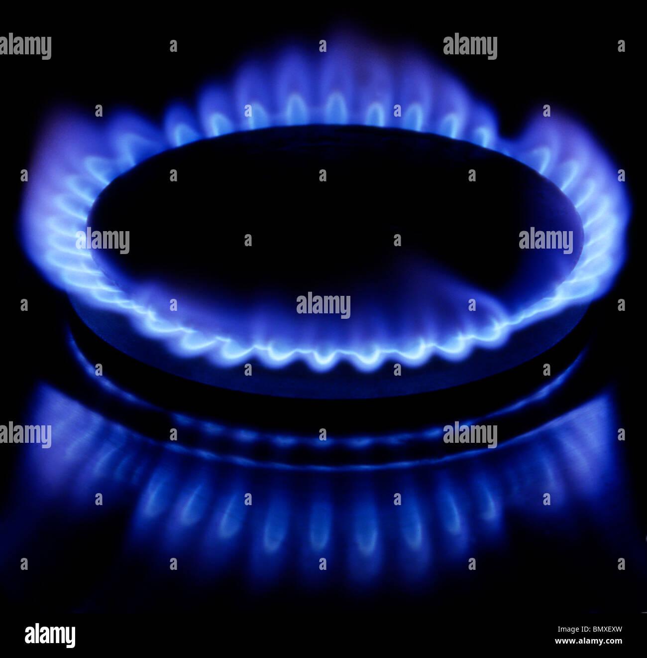 Burning gas of a kitchen range - Stock Image