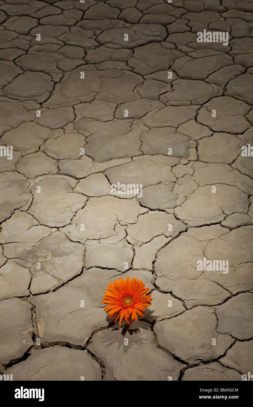Flower growing in desert landscape - Stock Image