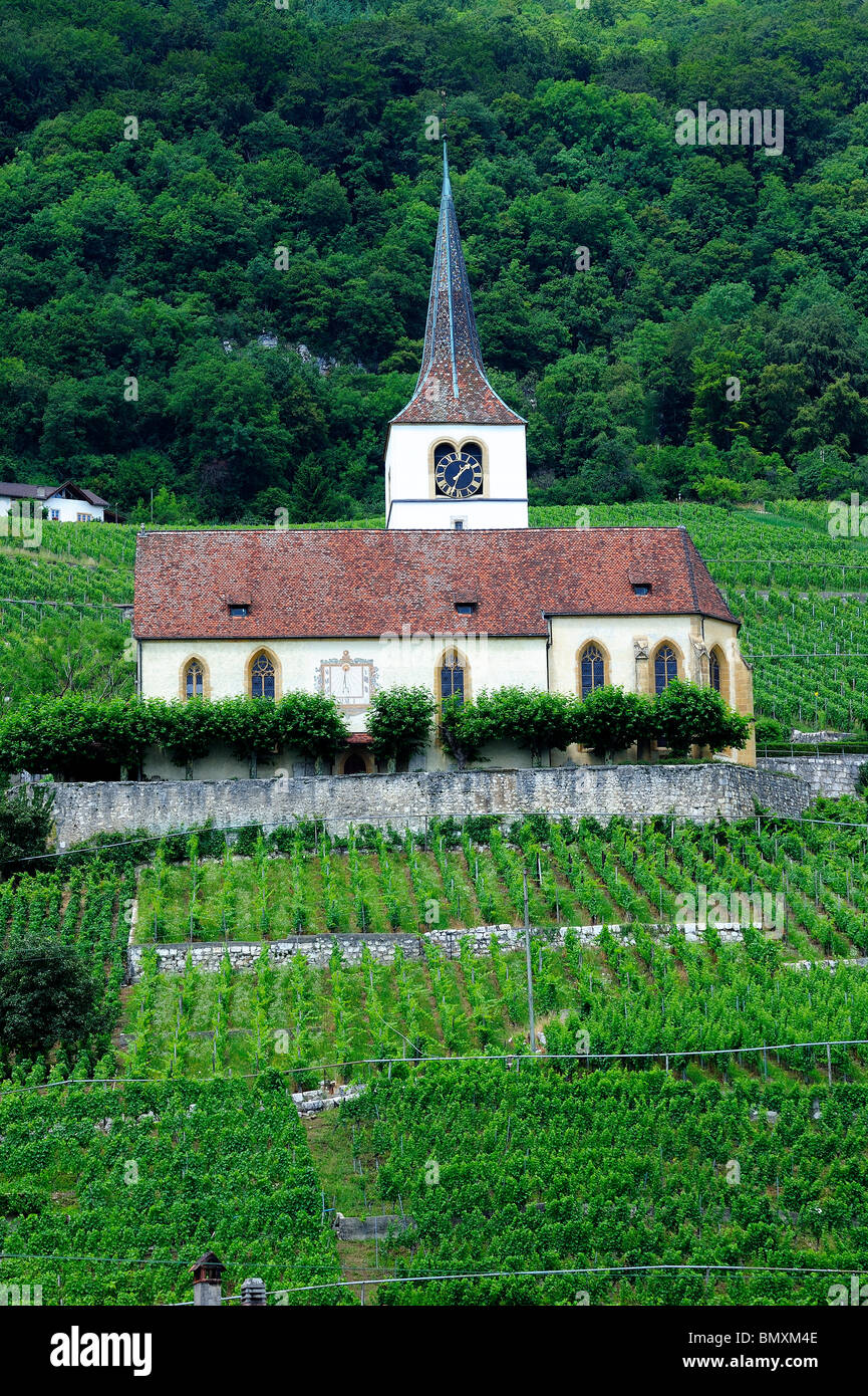 The church at Ligerz, Switzerland, on the shores on the Lac de Bienne (Bielersee), amongst the vines - Stock Image