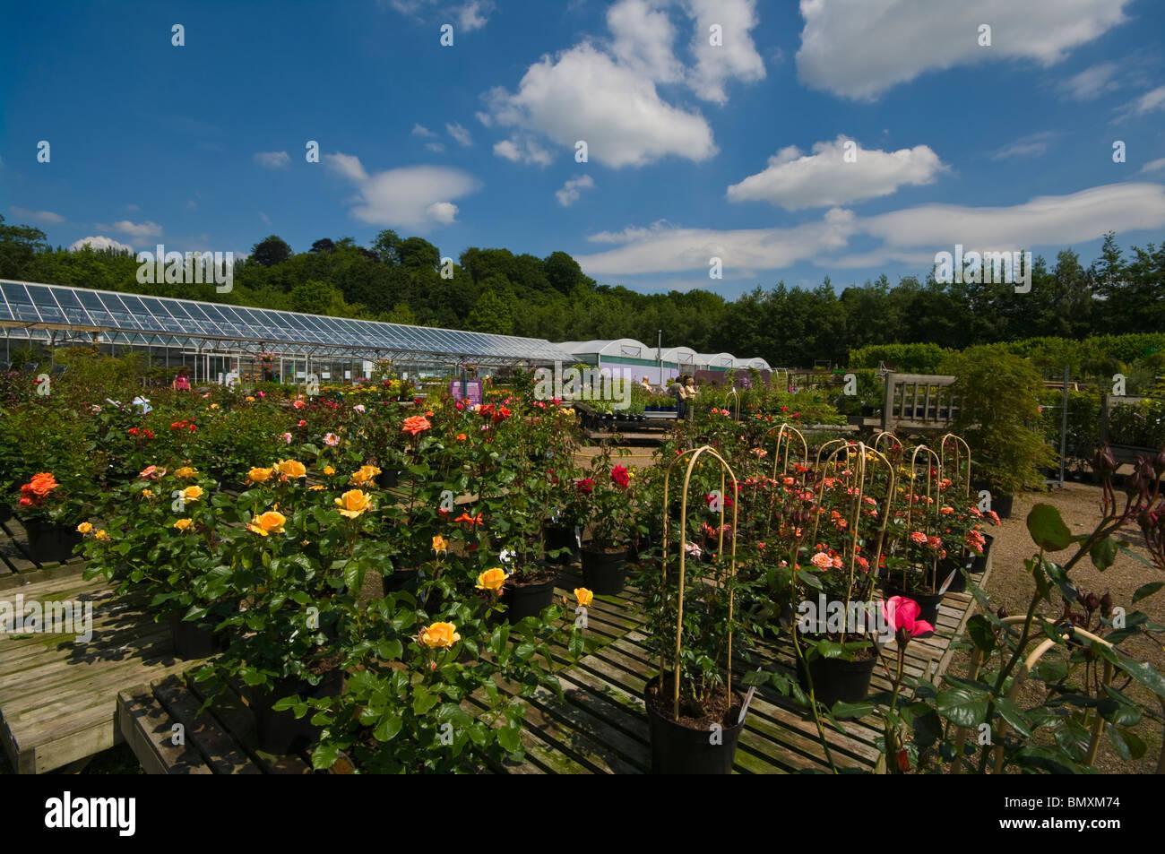 Garden Centre Sale Stock Photos & Garden Centre Sale Stock Images ...