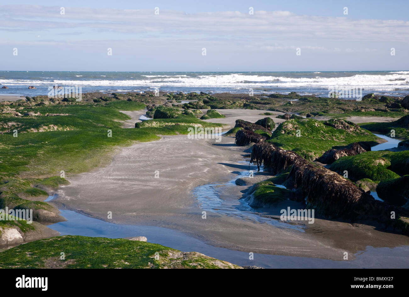 Minus tide, Pacific North Coast, exposing stone structures & marine flora. - Stock Image