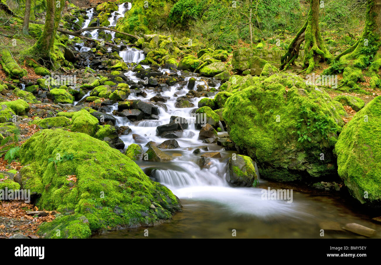 Starvation Creek Falls with mossy rocks. Columbia River Gorge National Scenic Area, Oregon - Stock Image