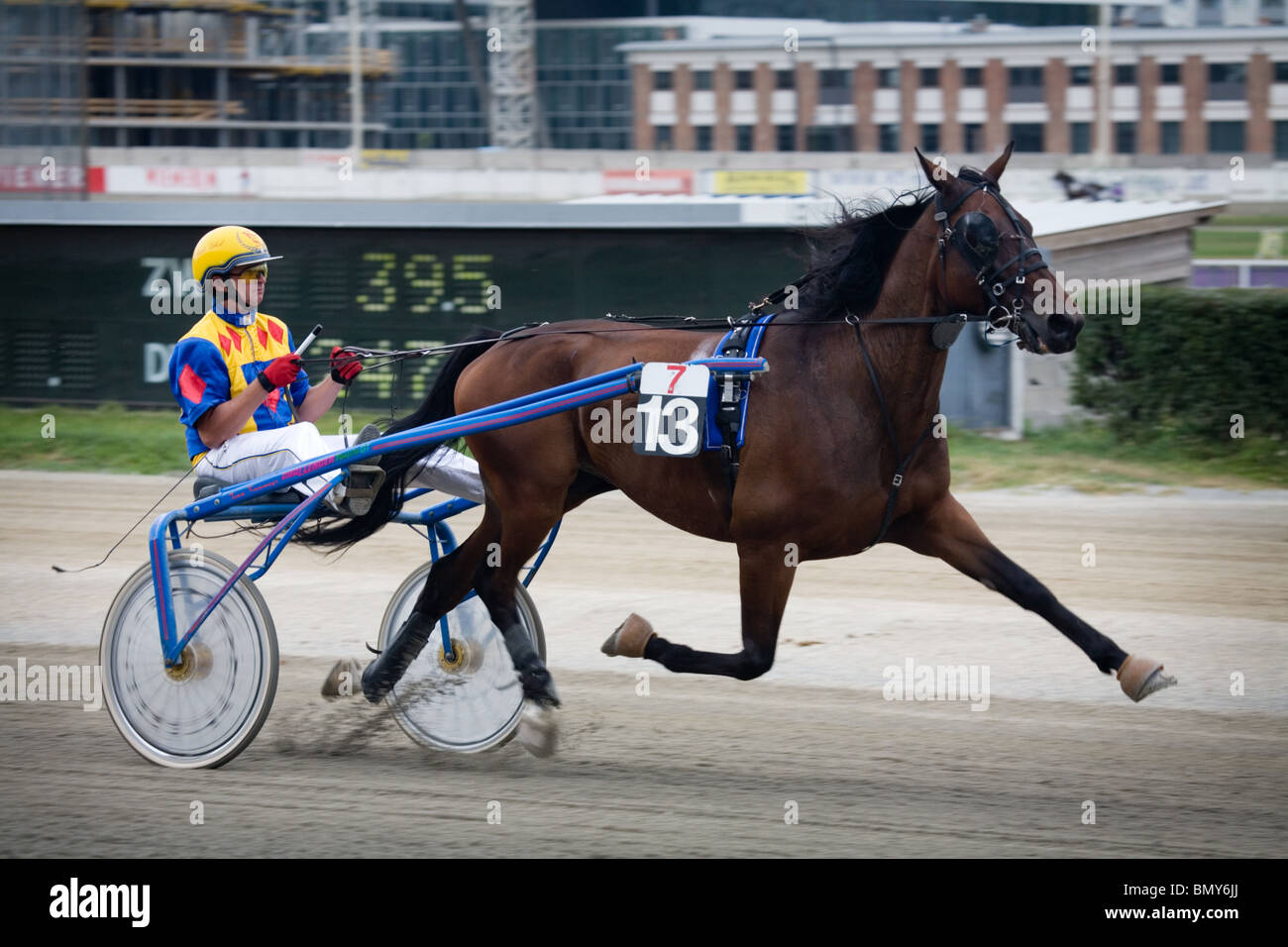 Trotting racer at the Krieau, Vienna, Austria - Stock Image