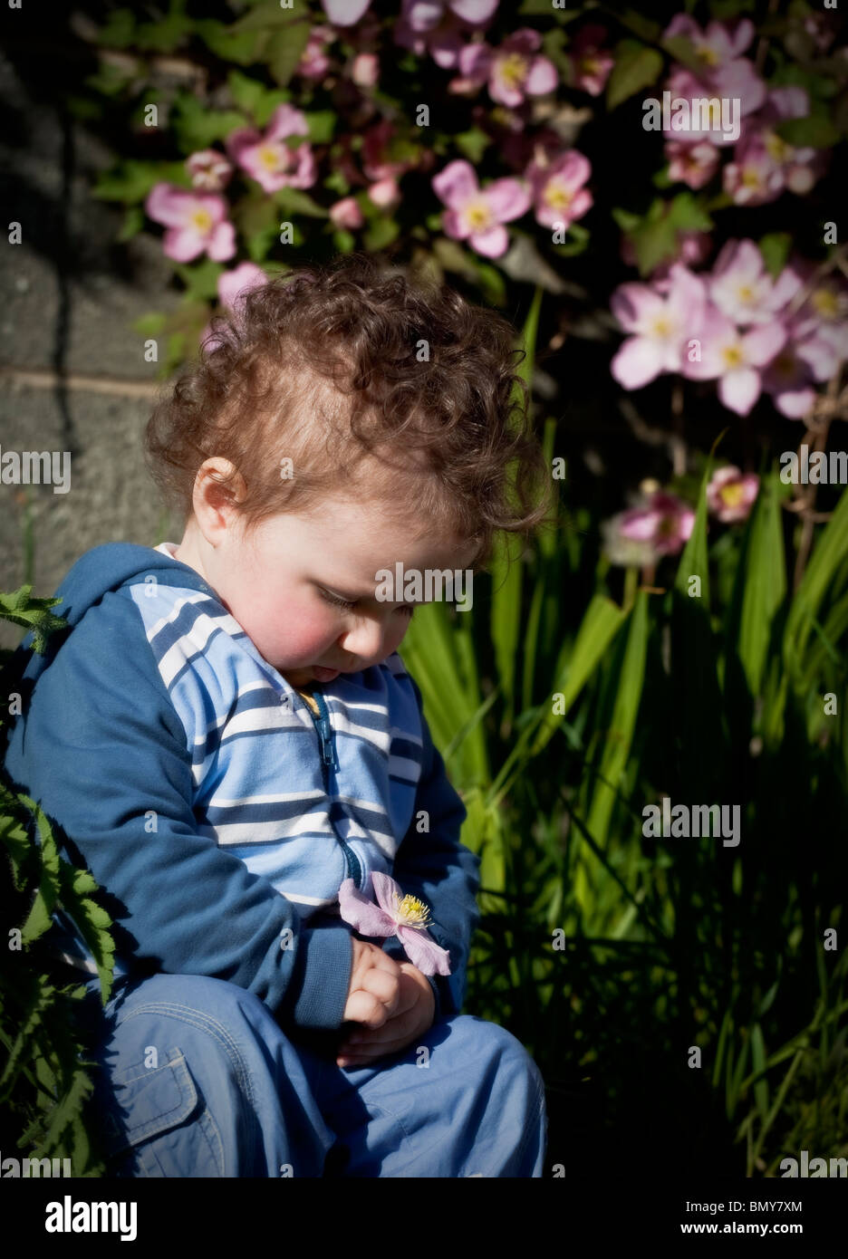 Male Toddler under 18 months old sitting looking at a pink flower. - Stock Image