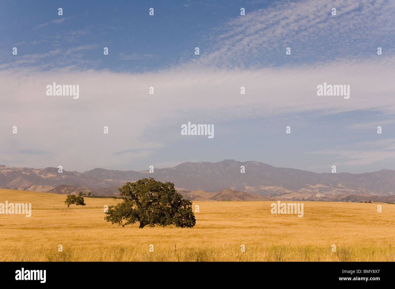 Lonely Tree Illustration - Stock Image