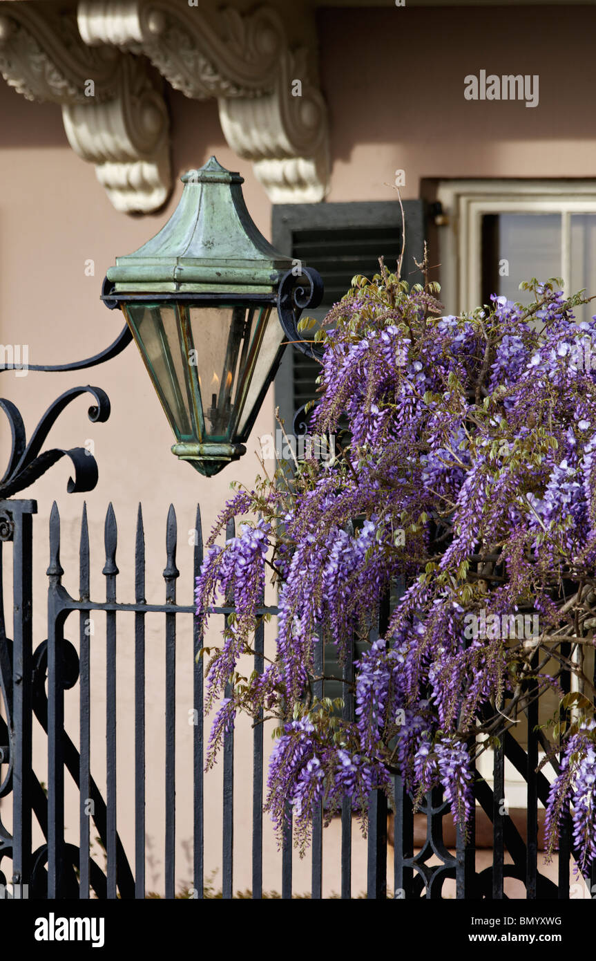 Gas Lamp, Wrought Iron Gate and Wysteria in Front of Home on East Bay Street in Charleston, South Carolina - Stock Image