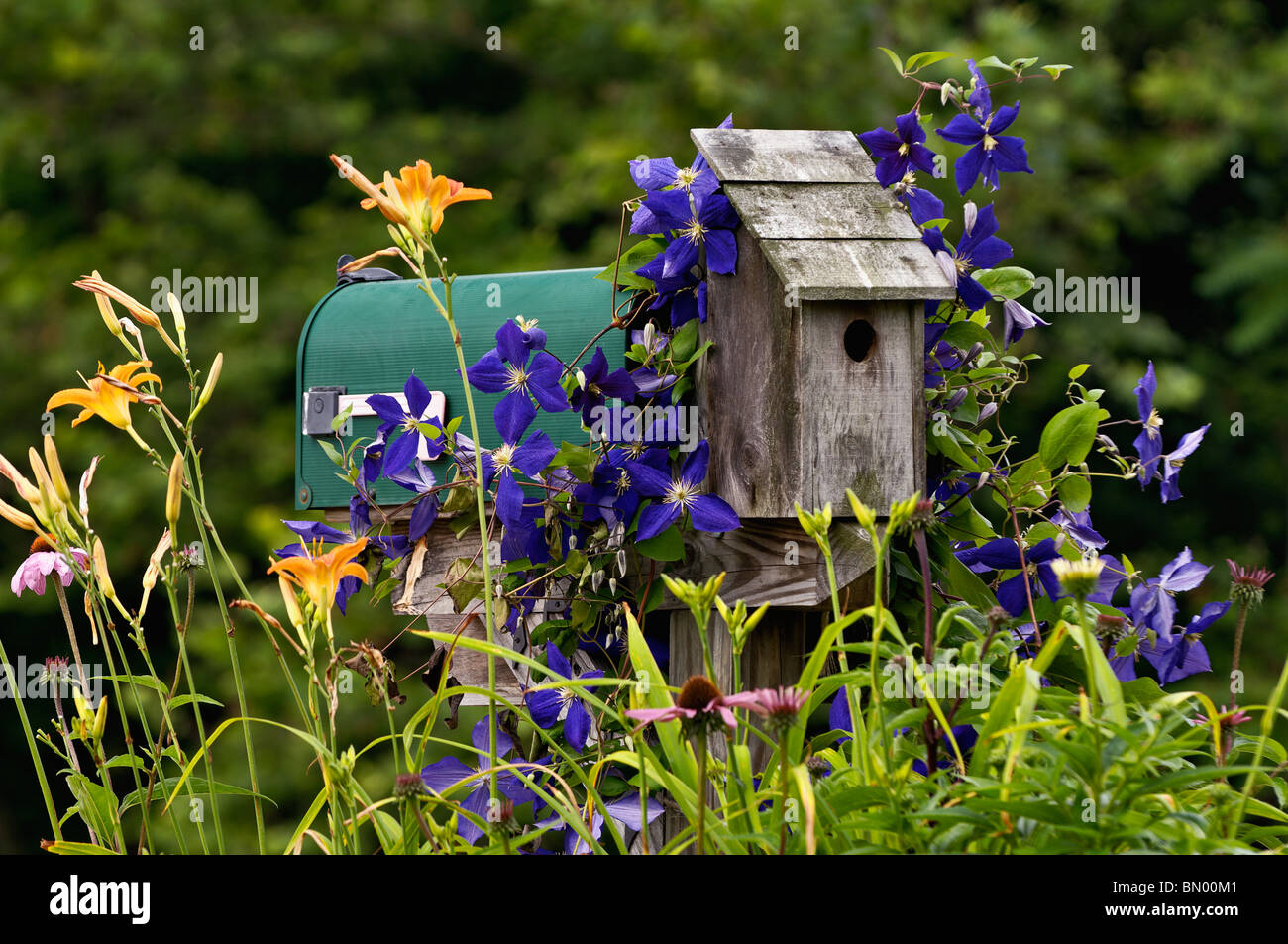 Mailbox, Birdhouse and Garden Flowers in Floyds Knobs, Indiana - Stock Image