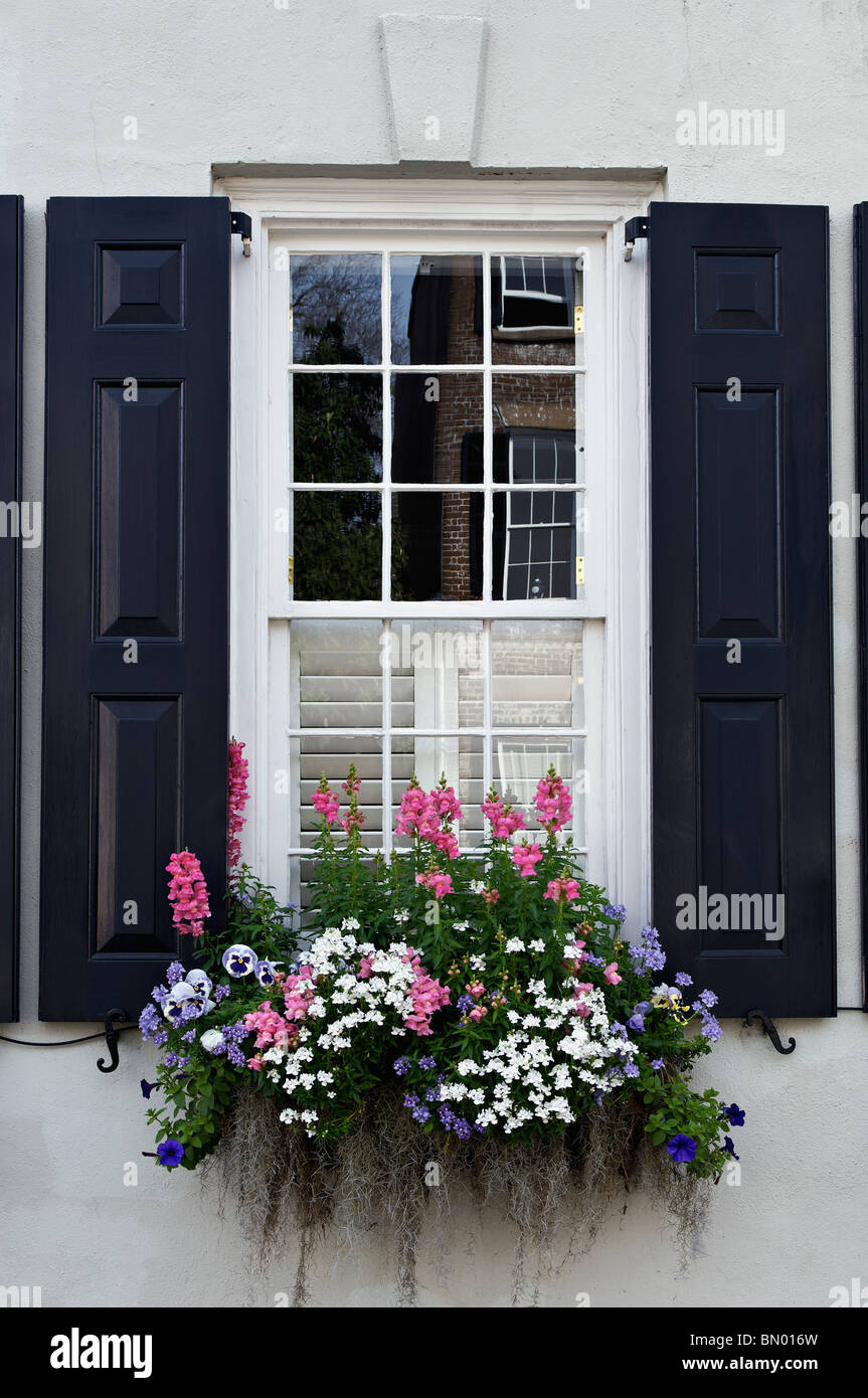 Window, Shutters and Flowers on Historic Home on Tradd Street in Charleston, South Carolina - Stock Image