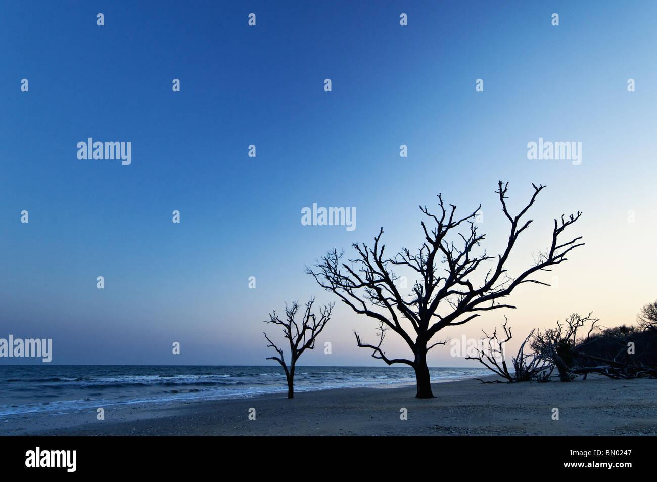 Dead Tree at Dusk at the Boneyard on Botany Bay on Edisto Island in Charleston County, South Carolina Stock Photo
