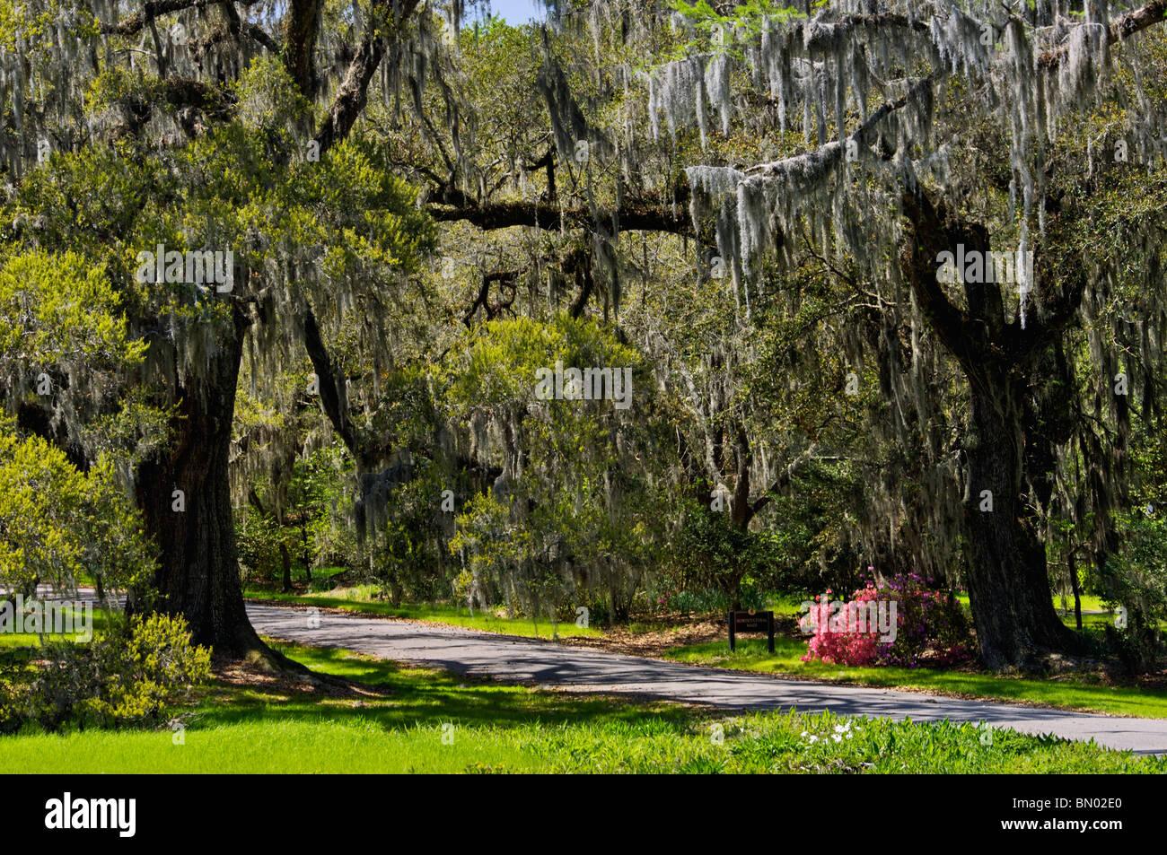 Magnolia Plantation Gardens Spring Stock Photos & Magnolia ...