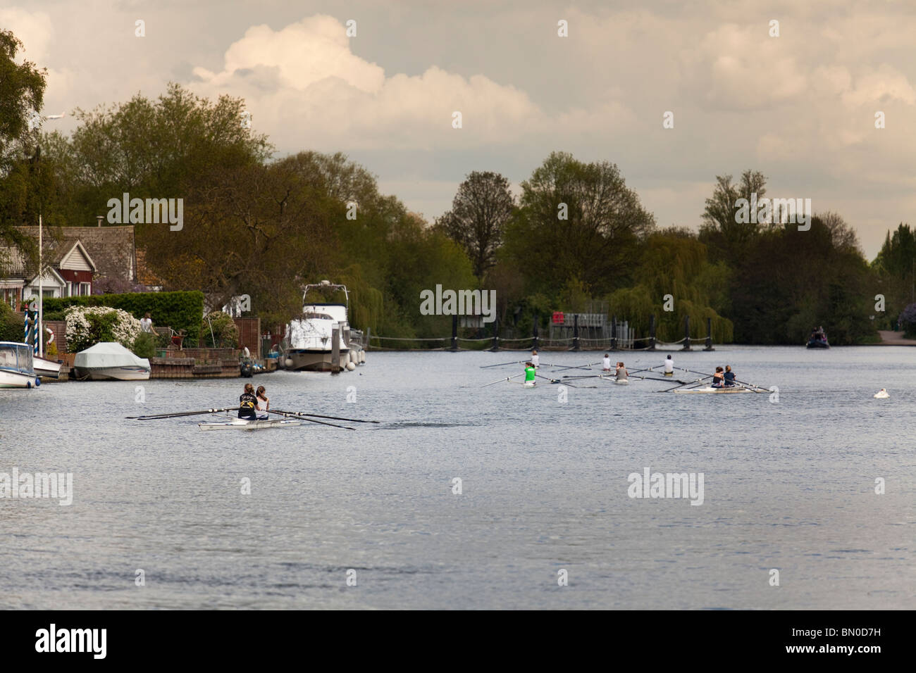 club outing of one and two person skulls rowing together on the River Thames - Stock Image