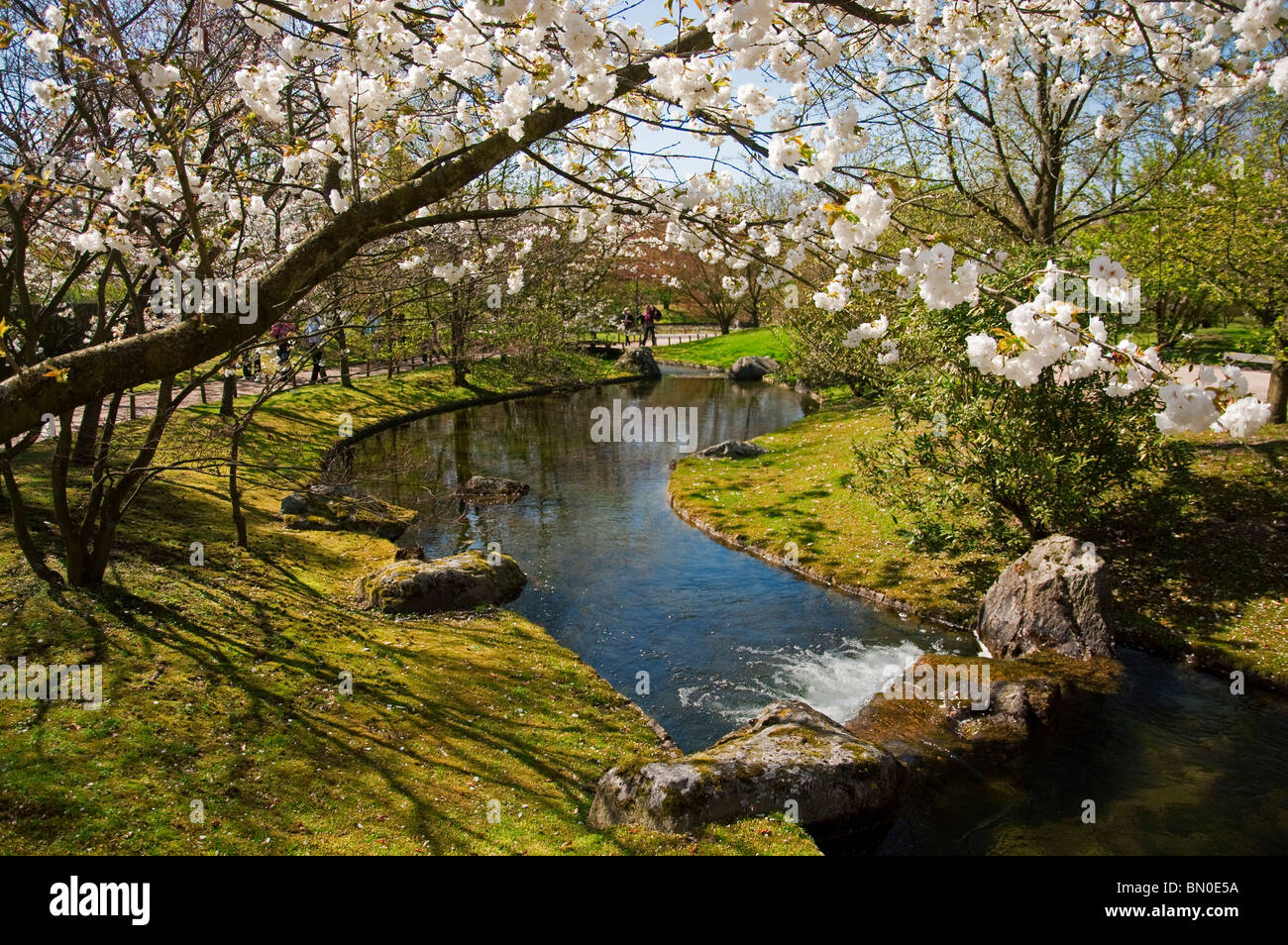 River and cherry tree blossoming at the Japanese garden, Hasselt ...