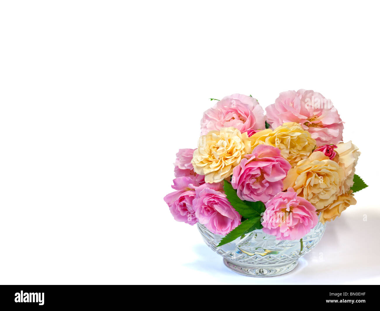 Shrub Roses Fritz Nobis and Buff Beauty in Crystal Rosebowl - Stock Image