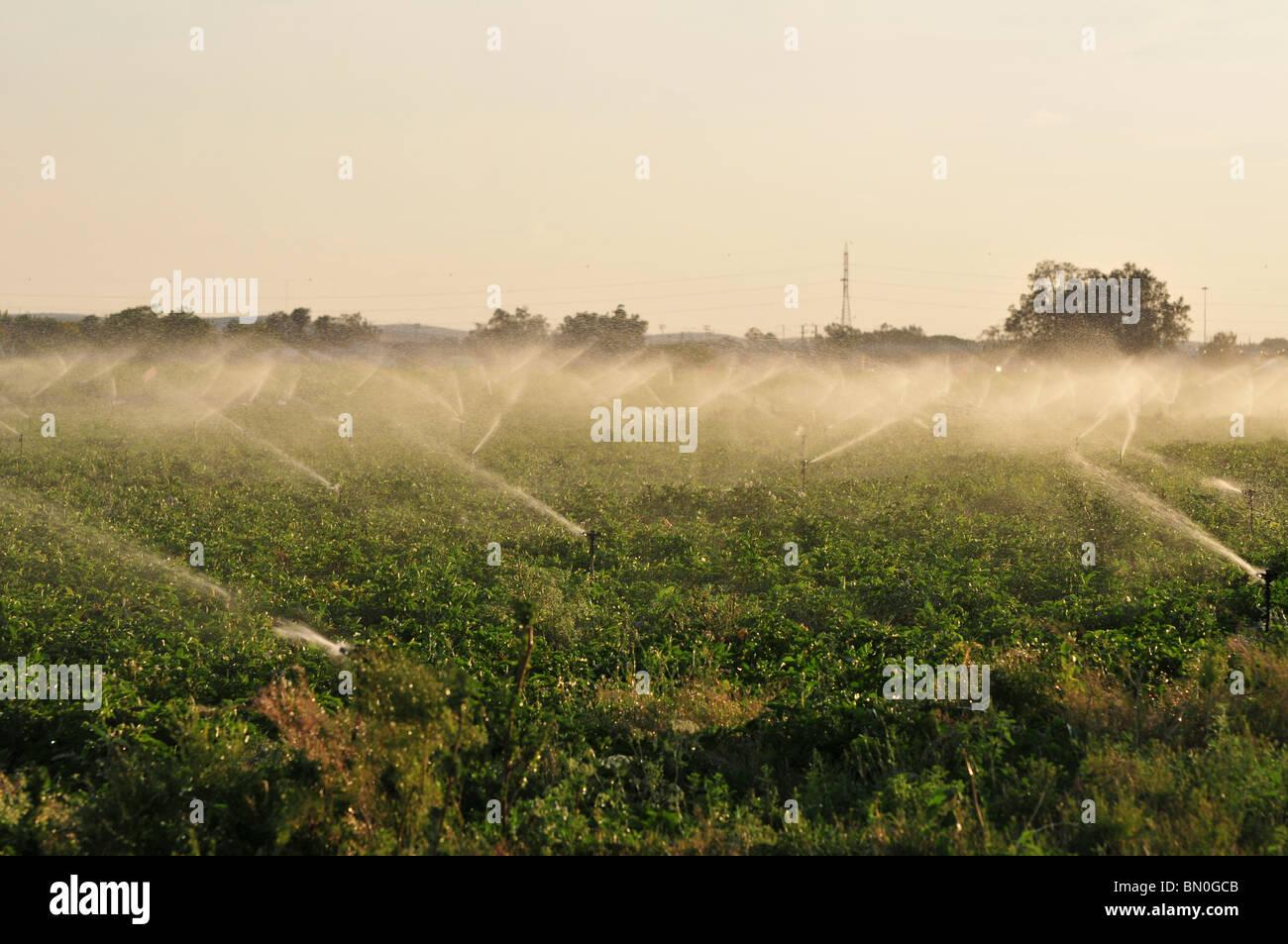 Israel, Negev Desert, field irrigation with sprinklers a wasteful watering method - Stock Image