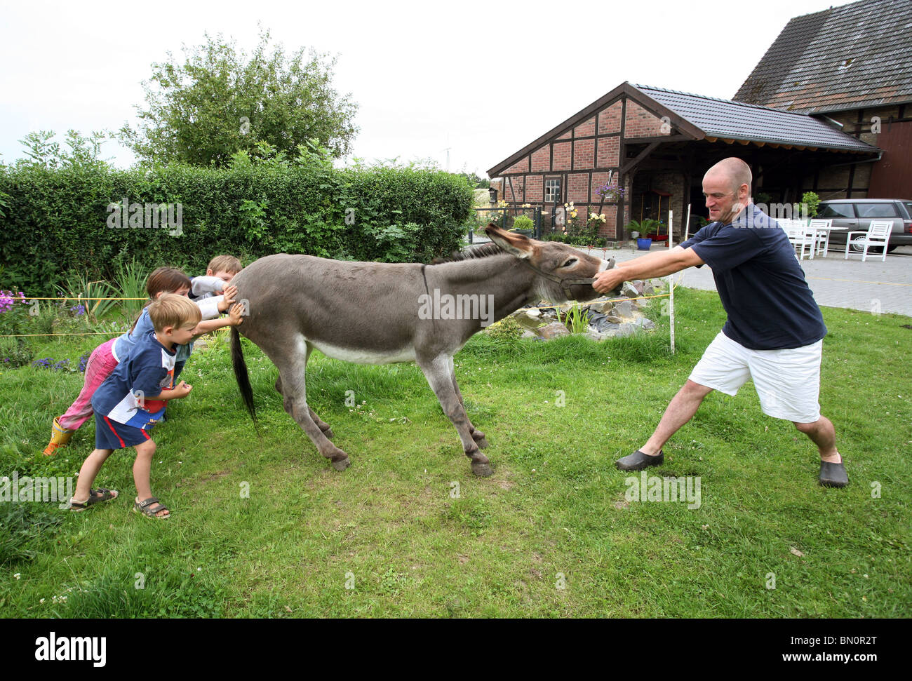 a-man-with-kids-try-to-make-a-stubborn-donkey-move-BN0R2T.jpg
