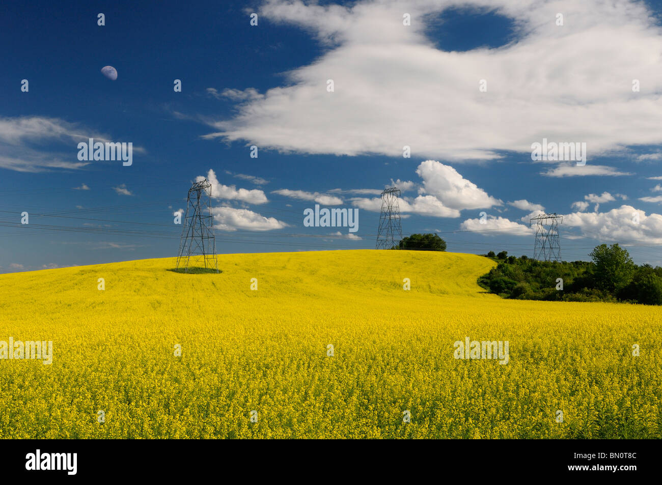 Field of yellow rapeseed crop with moon and hydro towers against a blue sky Oak Ridges Moraine Ontario Stock Photo