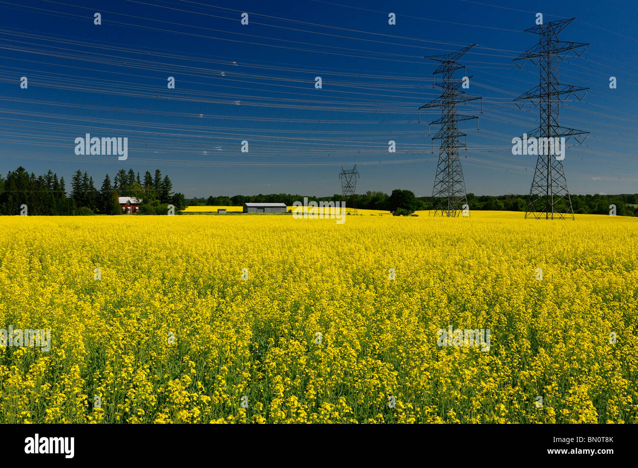 Field of yellow rapeseed crop with farmhouse and hydro towers against a blue sky Oak Ridges Moraine Ontario Stock Photo