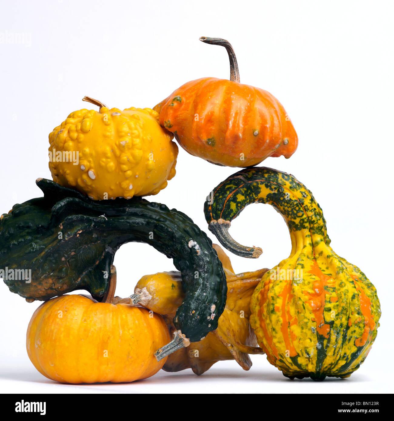 Pile of gourds / squash in studio. - Stock Image