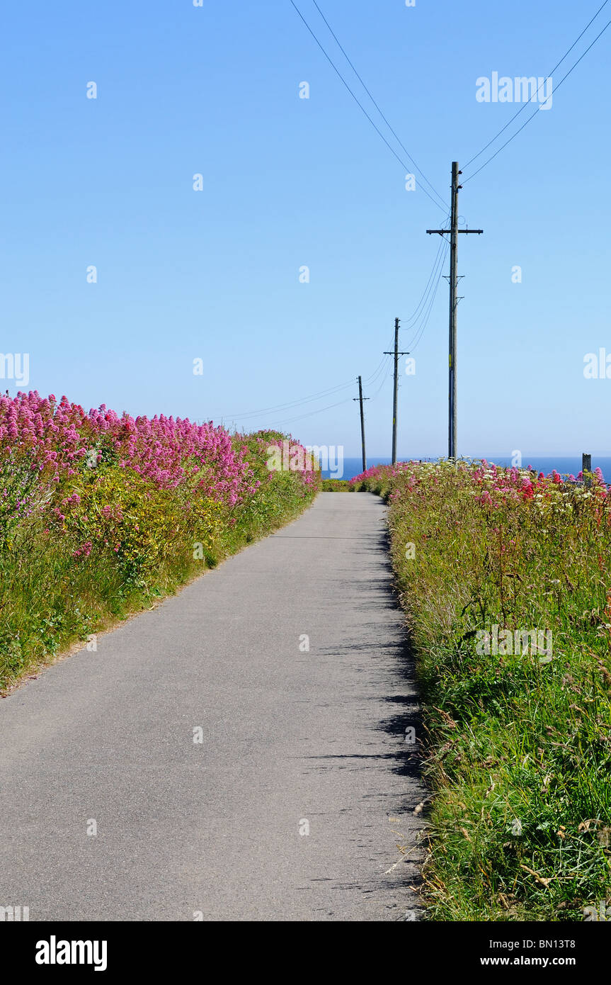 a quiet cornish lane, north cornwall, england, uk - Stock Image
