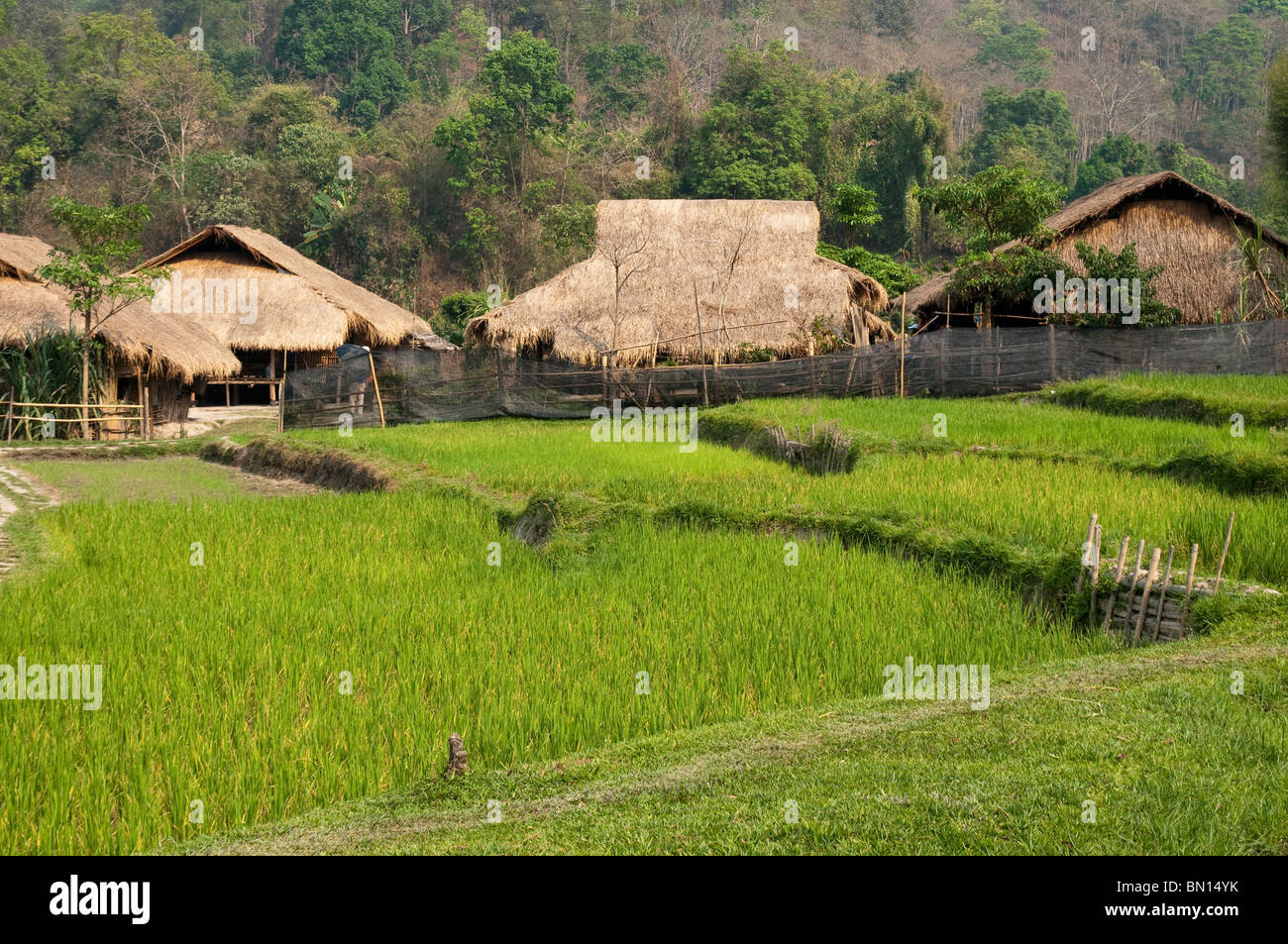 Rice paddies and houses at Baan Tong Luang, village of Hmong people in rural Chiang Mai Province, Thailand. - Stock Image