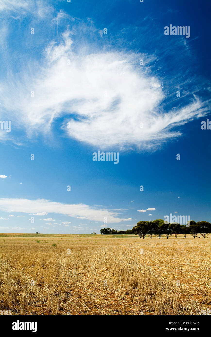 Wheat fields and cloud formations - Stock Image