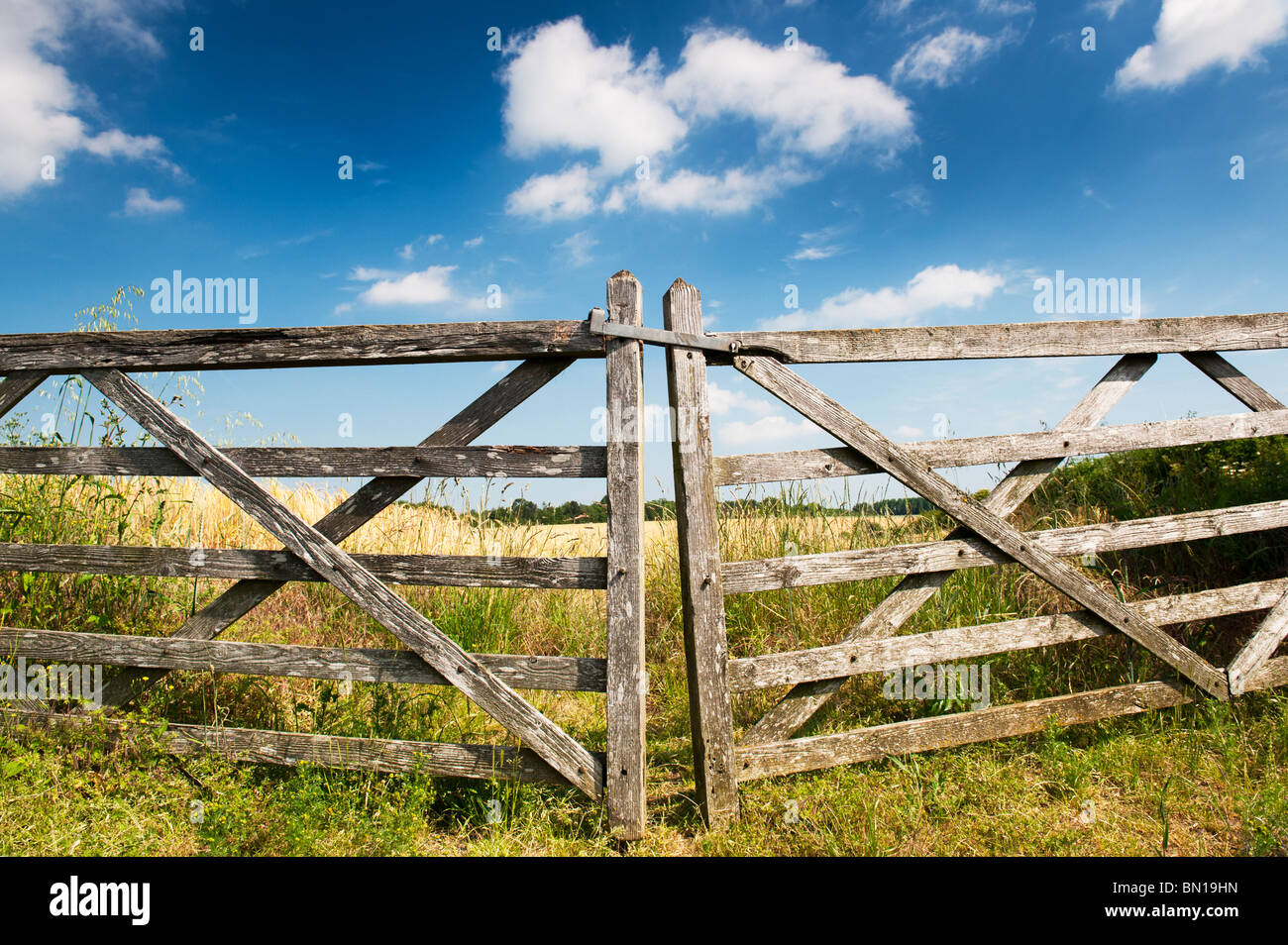 Old five bar wooden gates in front of a field of barley in the english countryside. Oxfordshire, England - Stock Image