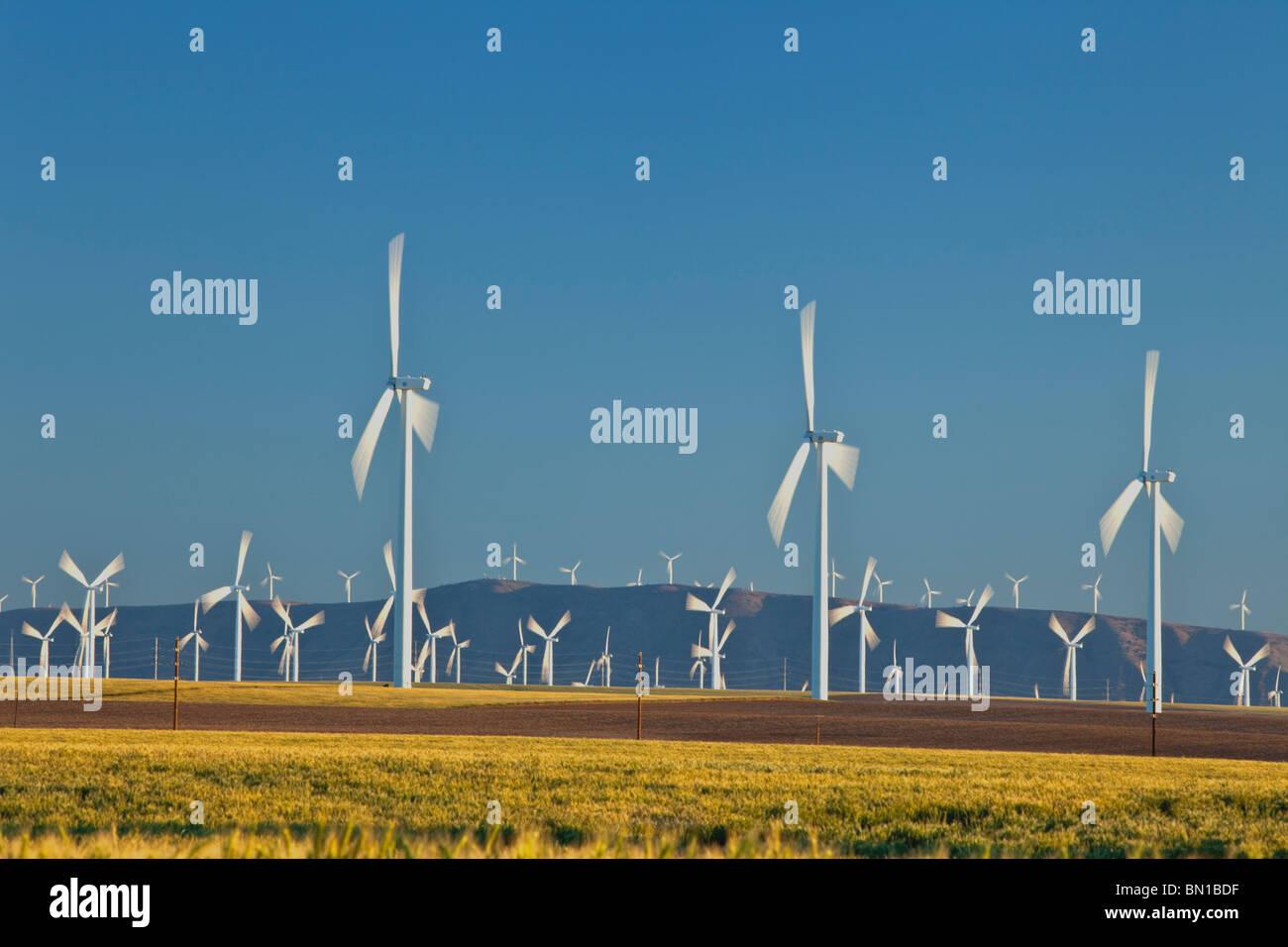 Wind farm, maturing wheat & fallow fields Stock Photo