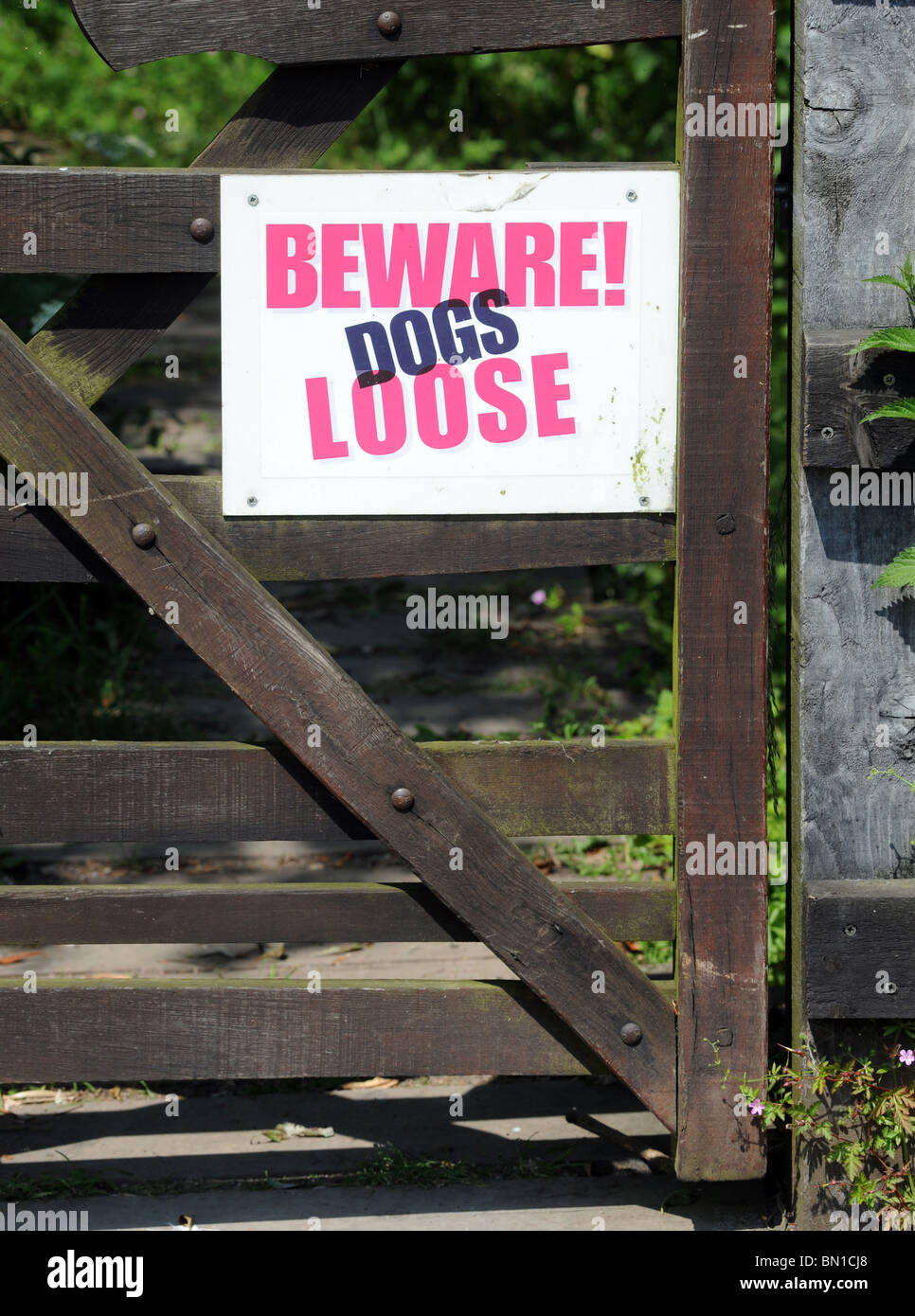 'BEWARE DOGS LOOSE' SIGN ON GATE UK - Stock Image